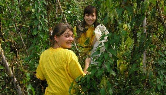 Legambiente ricerca volontari che amano la natura